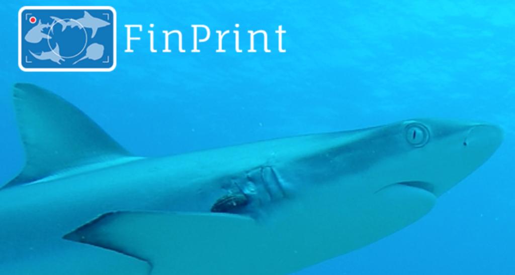 Projet FINPRINT Polynésie française (2016-Présent)